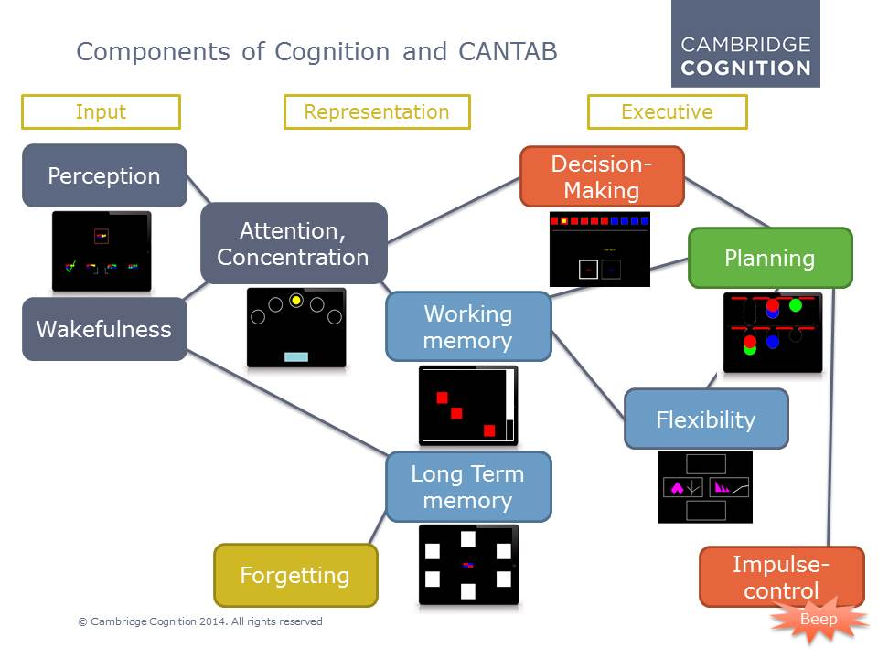 Components of Cognition and Cantab